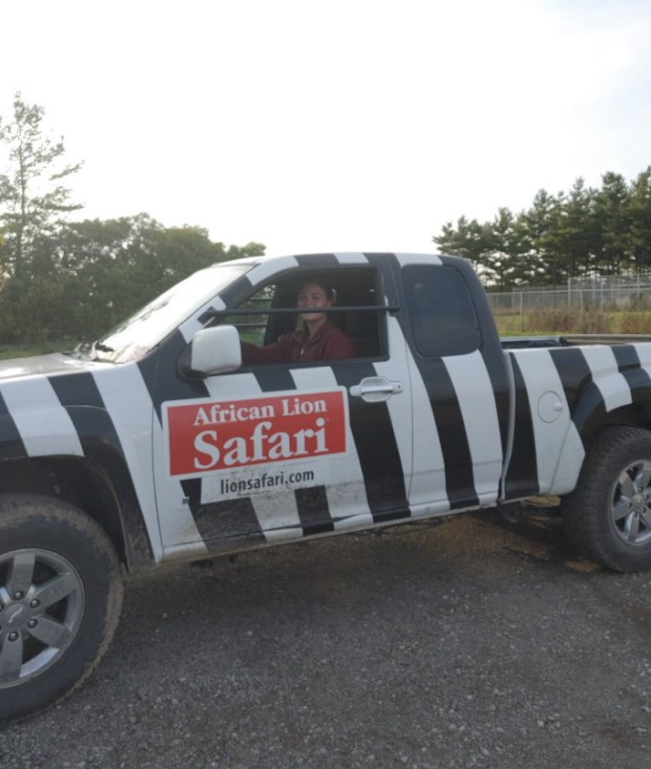 Young woman looks out the window of a zebra-striped pickup truck